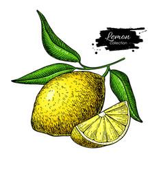 lemon drawing summer fruit artistic vector image