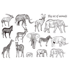 Set hand drawn detailed african animal vector