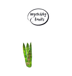 stalks of fresh green asparagus vector image