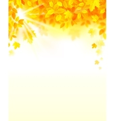 autumn decoration composition with maple leaves vector image