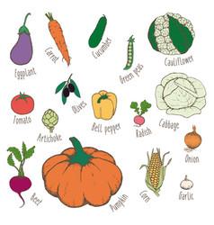 colorful hand drawn eco food set vector image