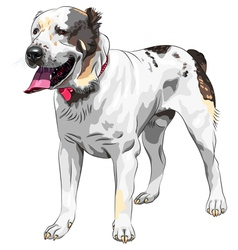 Central Asian Shepherd Dog vector