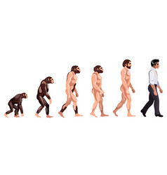 evolution from monkey to dancer vector image