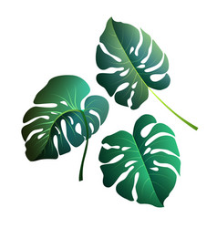 Monstera leaves botanical exotic tropical plants vector