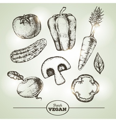 Vintage Hand drawing sketch set of vegetables vector image