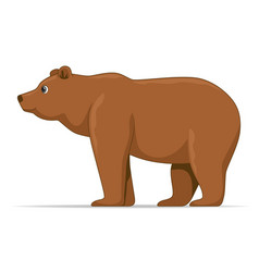 brown bear animal standing on a white background vector image