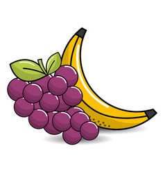 grape and babana fruit icon vector image