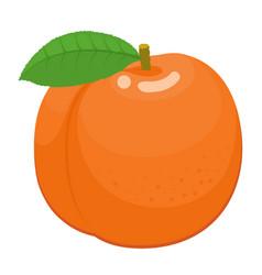 orange cartoon peach with green leaf vector image