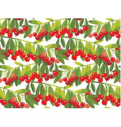 rape cherry fruit seamless pattern vector image