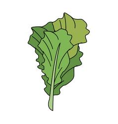 Spinach fresh vegetable vector
