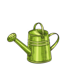 garden metal watering can vector image