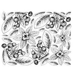 Hand drawn background of bunchberries and cherries vector