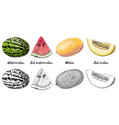 hand-drawn set melon and watermelon in color vector image