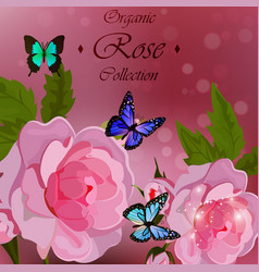 roses and butterflies vector image