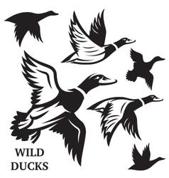set of flying wild ducks vector image vector image