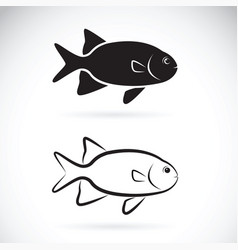 two fish on white background aquatic animals vector image