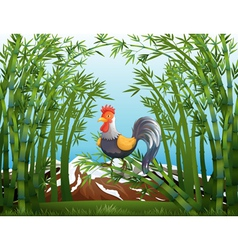 A rooster in the bamboo forest vector image
