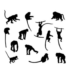 ape and monkey collection - silhouette vector image