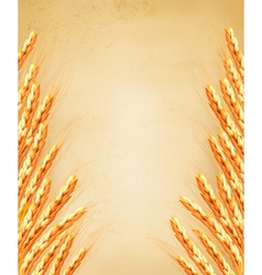 Ears of wheat on old paoer vector image