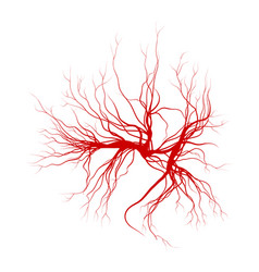Human veins red blood vessels design isolated on vector