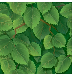 Seamless pattern with green spring leaves of birch vector image