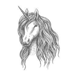 Unicorn head with mane sketch vector