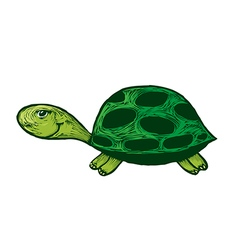 Smiling turtle cartoon vector image