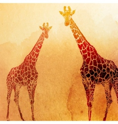 vintage of watercolor giraffes on the old p vector image