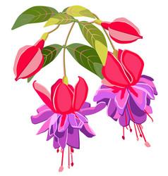 Exotic flower fuchsia vector