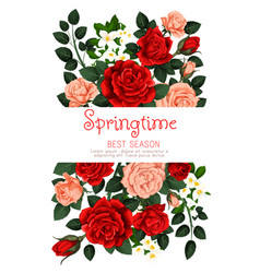Flowers roses spring greeting card vector