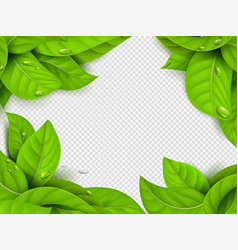 realistic green leaves with drops frame vector image