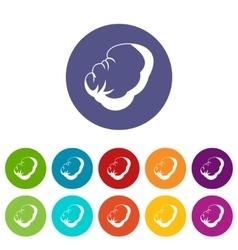 Spleen set icons vector