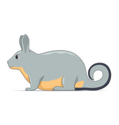 Viscacha animal standing on a white background vector