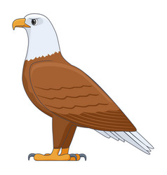 american bald eagle bird on a white background vector image