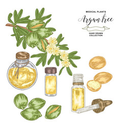 Argan tree argania branch with nuts and flowers vector