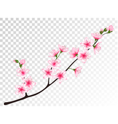 chinese cherry branch with flowers vector image