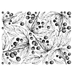 Hand drawn background of allophylus edulis fruits vector