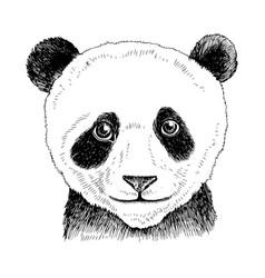 hand drawn portrait funny panda bear baby vector image
