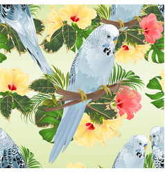 seamless texture birds budgerigars on a branch vector image