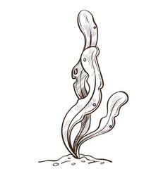 seaweed underwater plant leaves or bush in sand vector image