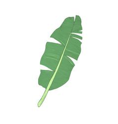 banana leaf single vector image