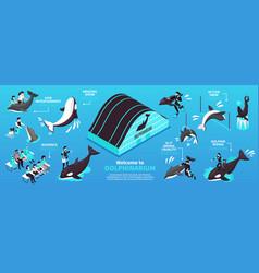 Dolphinarium isometric infographics layout vector