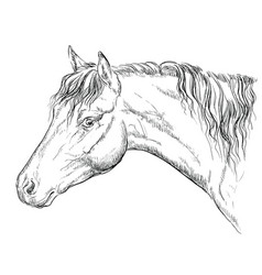 Horse portrait-11 vector