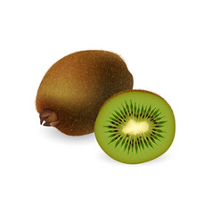kiwi fruit isolated on white background vector image