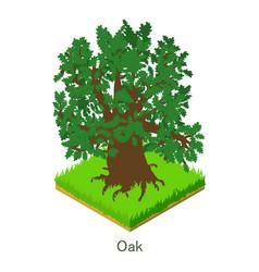 Oak icon isometric style vector