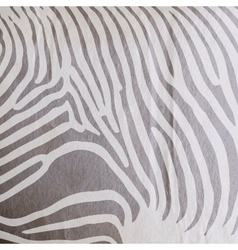 abstract old paper background with animal zebra vector image