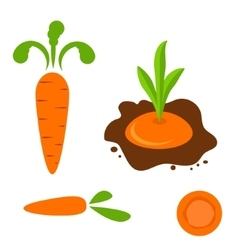 Carrot set in different styles vector