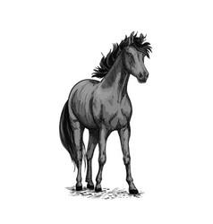 Horse equine sketch symbol vector
