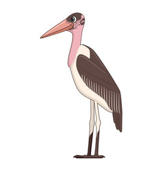 Marabou stork bird on a white background vector