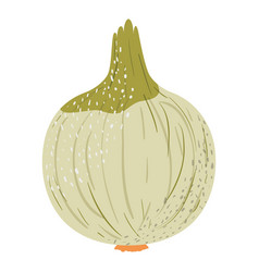 white background with onion with stains vector image vector image